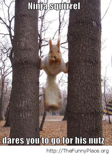 Funny shinobi squirrel