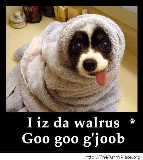 Funny walrus dog