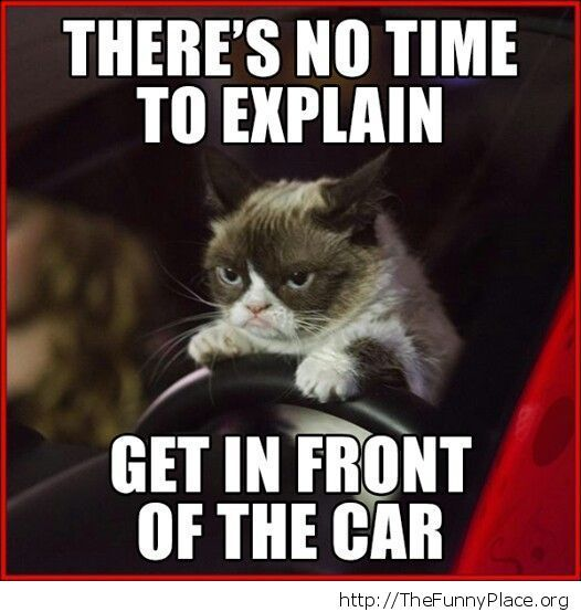Grumpy Cat - Car accident