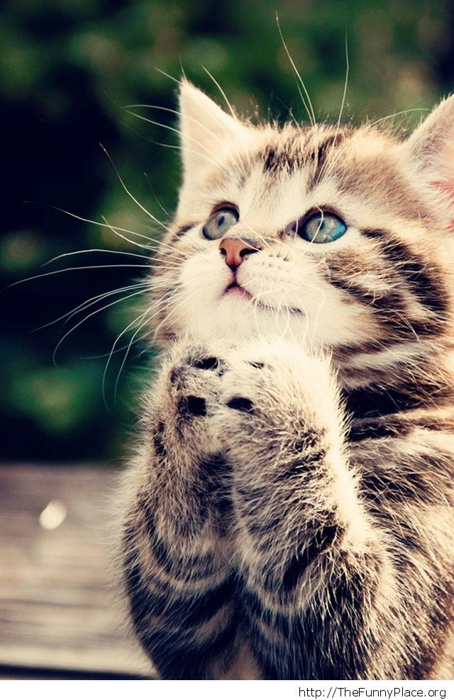 Kitty - Thank you God!