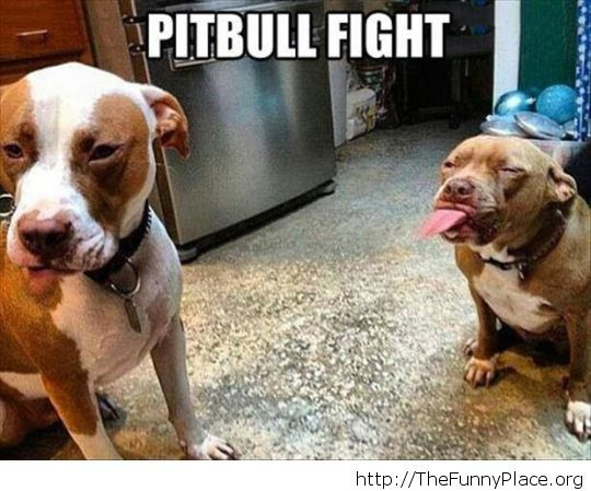 Pitbulls are really agressive, for sure...