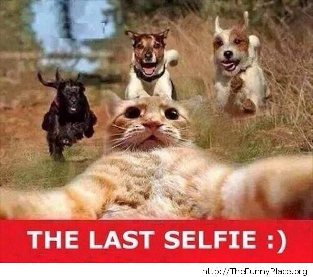 Selfie to the end