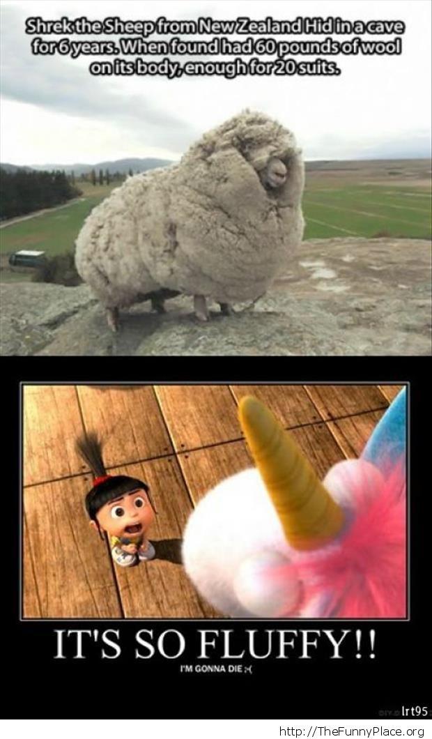 Shrek the sheep from New Zealand