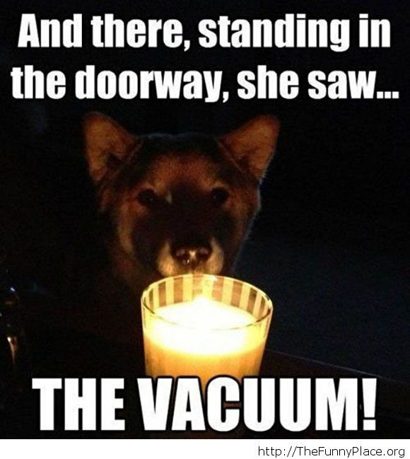 Some scary stories for dogs