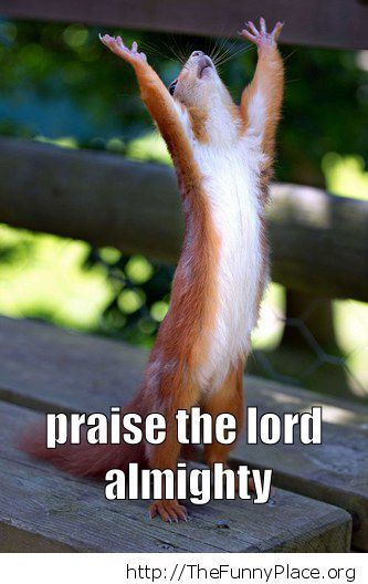 squirrel � praise the lord � thefunnyplace