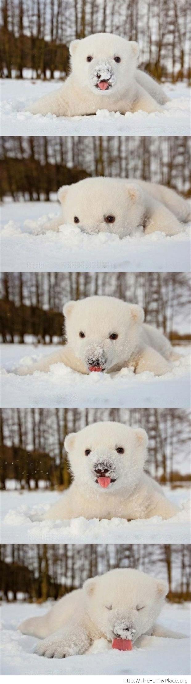 Sweet cub