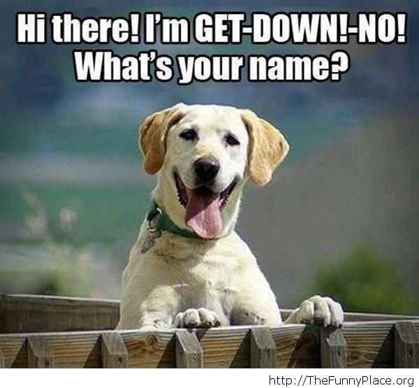 What a funny name for a dog...