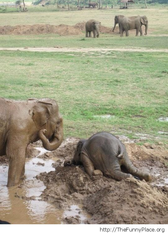 When a baby elephant gets upset
