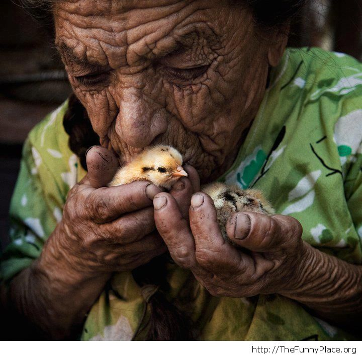 Awesome picture - Old man with chicks