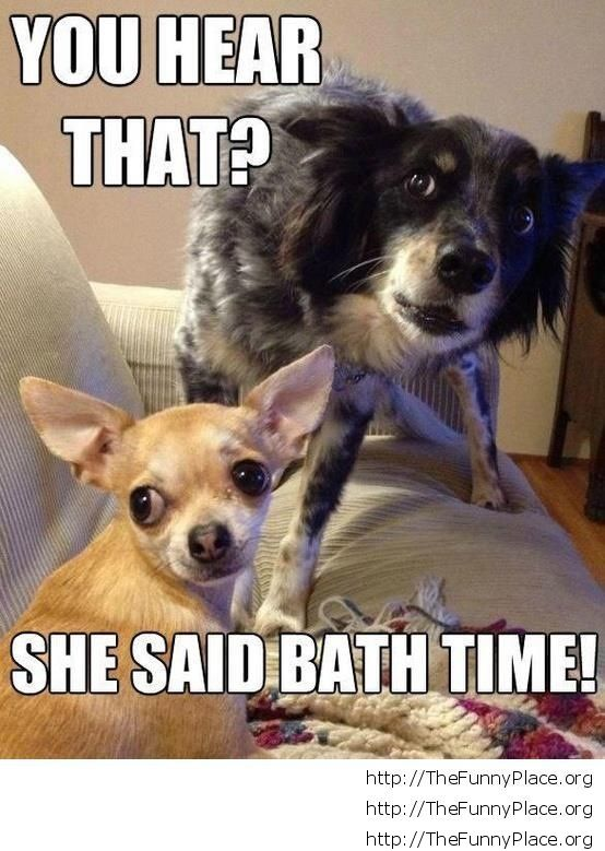 Bath time dog faces
