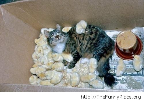 Cat with chicks