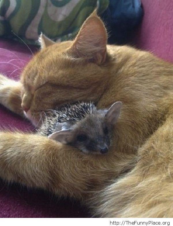 Cat with hedgehog
