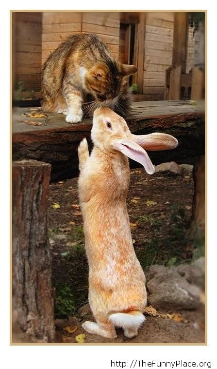 Cat with rabbit