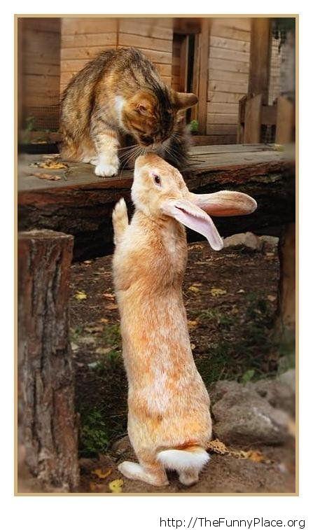 Cat with rabbit