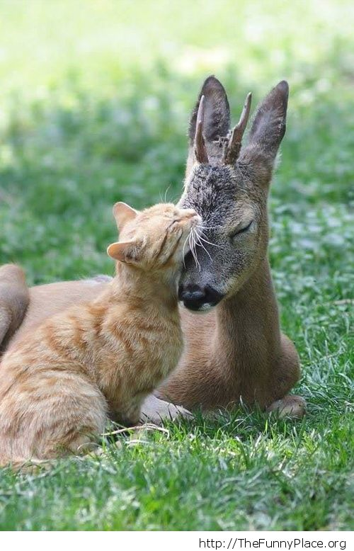 Cat with young deer