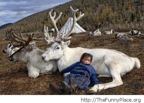 Child sleeping on reindeer
