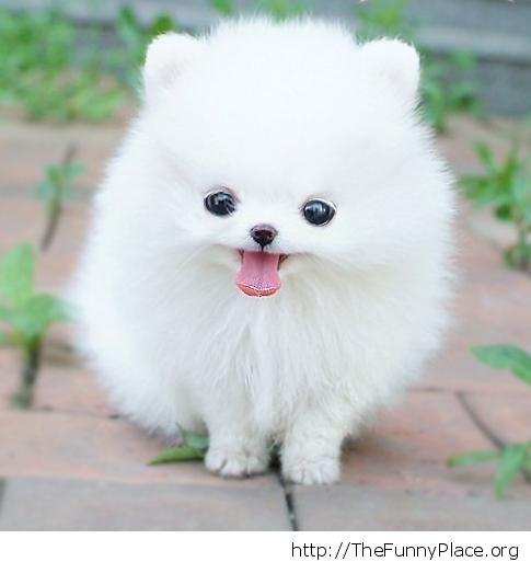 Cute little fluffy dog