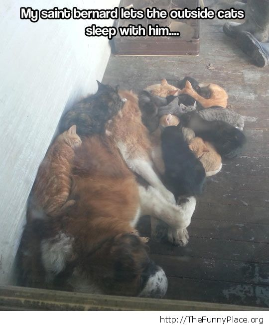 Dog and cats - Sleep in harmony