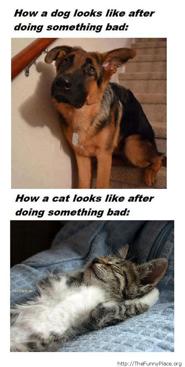 Dog vs cat - When doing something bad