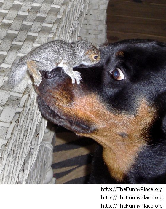 Dog with baby squirrel