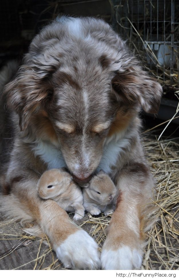 Dog with two baby rabbits