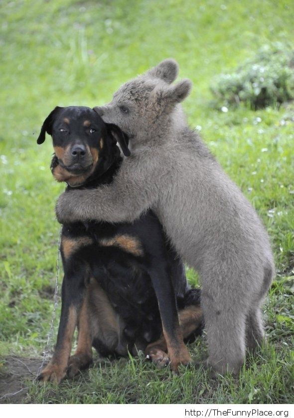 Female dog with baby bear