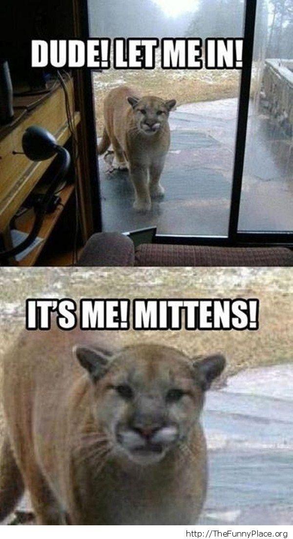 Funny Cougar