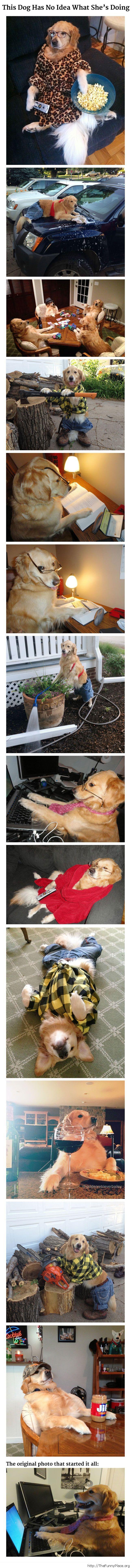 Funny No Idea Dog