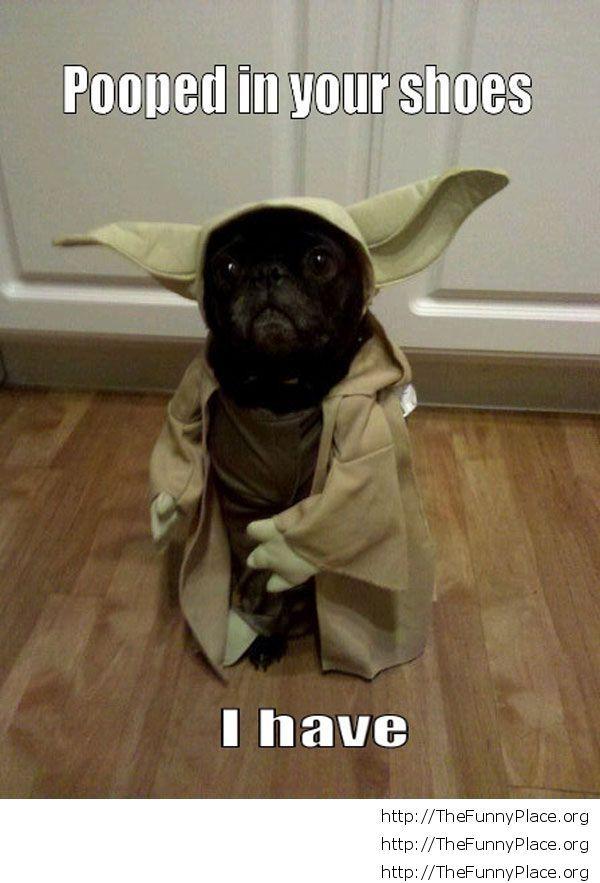 Funny Yoda Dog