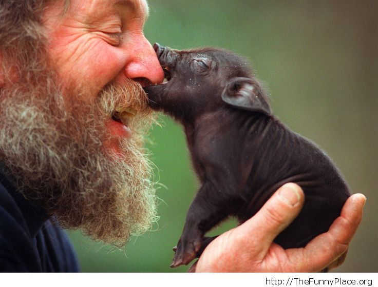 Funny beard guy and piggy