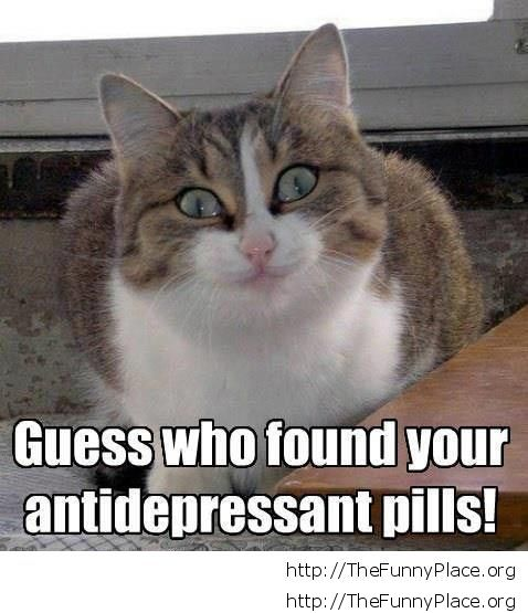 Funny cat and antidepressant pills