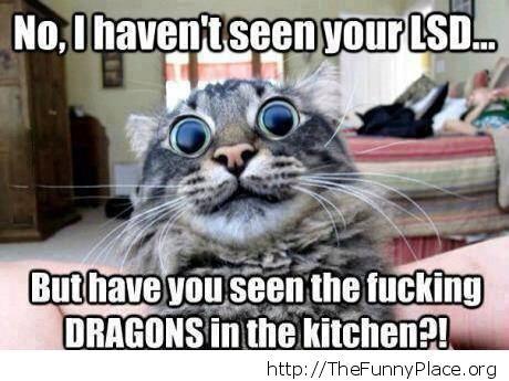 Funny cat on LSD