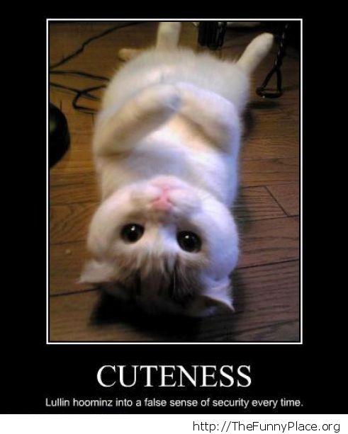 Funny cute kitty