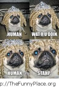 Funny dog - Stahp