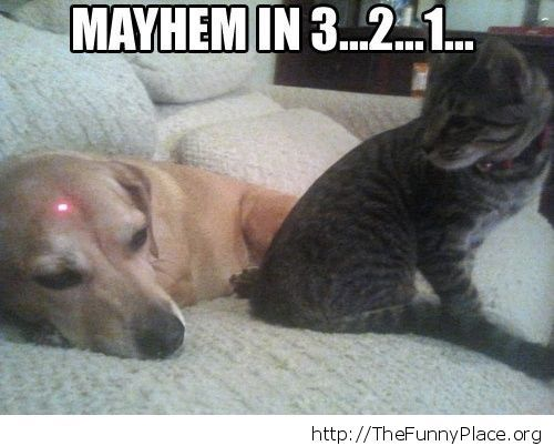 Funny dog-cat mayhem