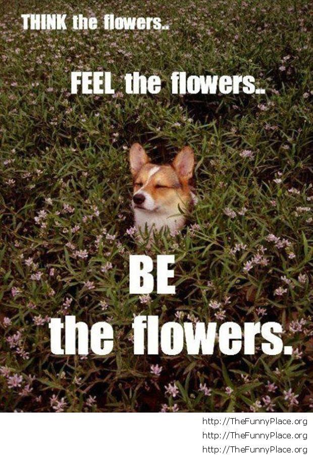 Funny dog in meditation