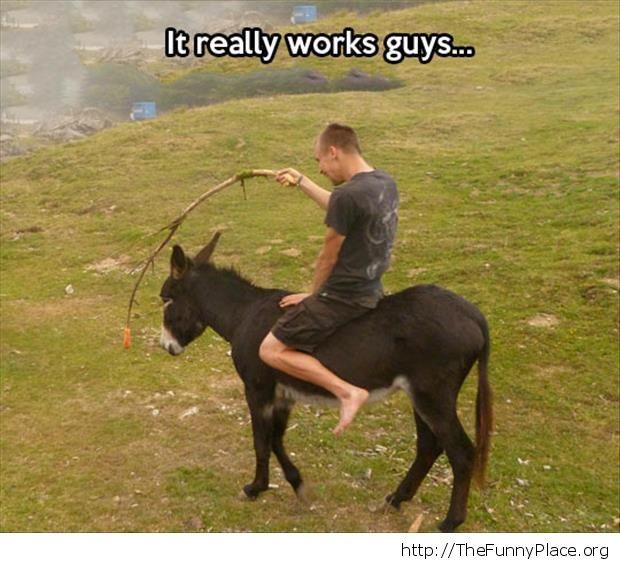 Funny donkey ride