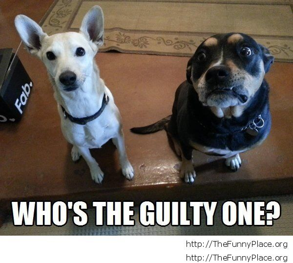Funny guilty dog face