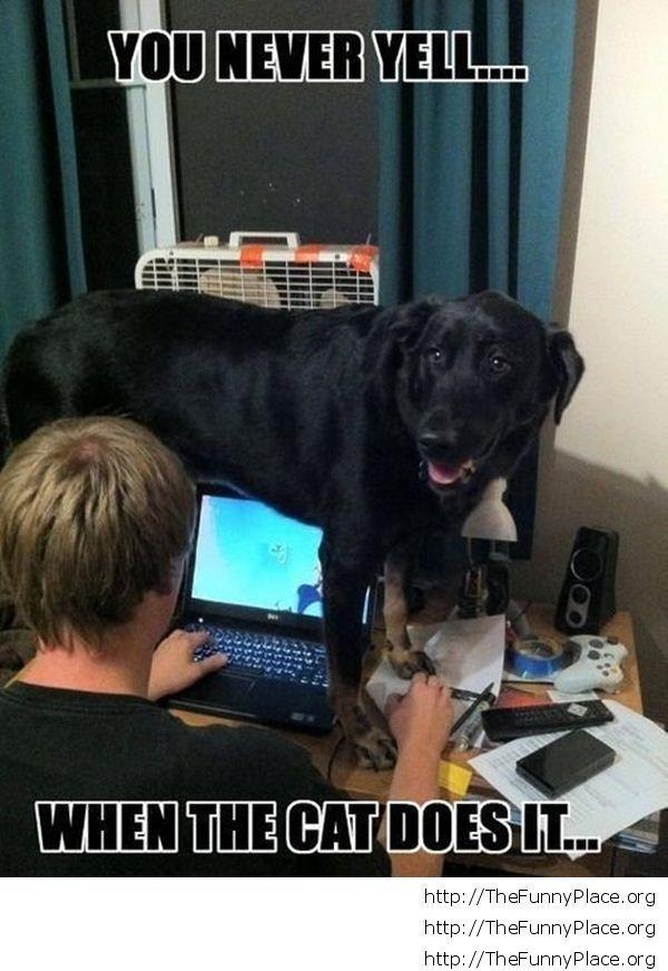 Funny jelous dog