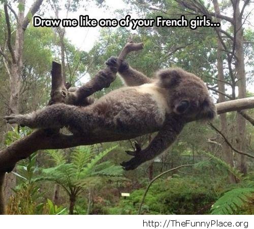 Funny lazy koala