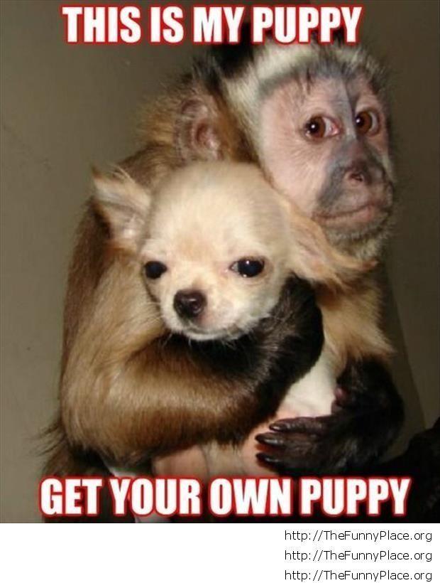 Funny monkey with dog