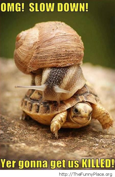 Funny speed turtle with snail