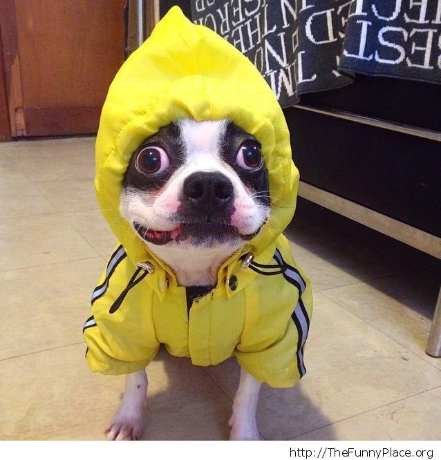 Funny sporty dog