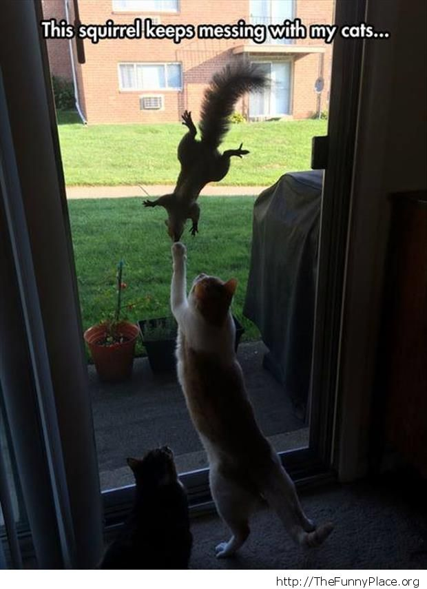 Funny squirell playing with two cats