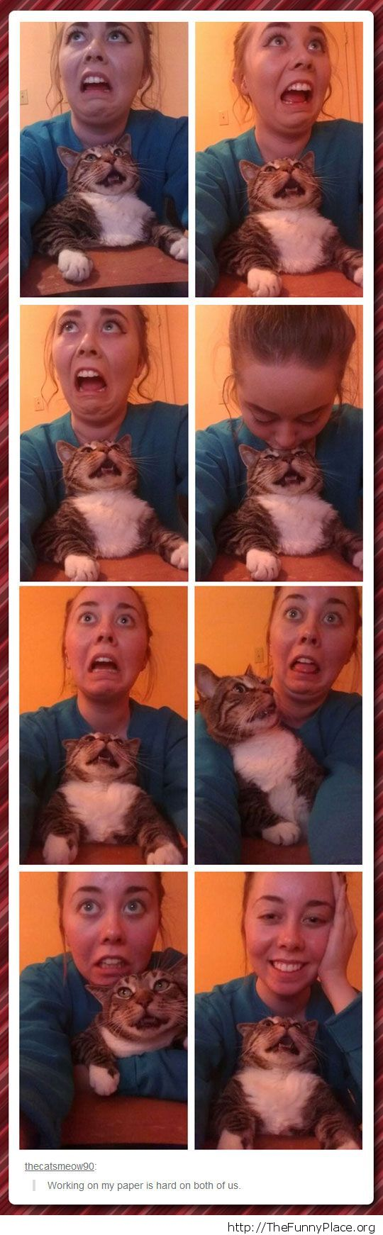 Funny woman and cat faces