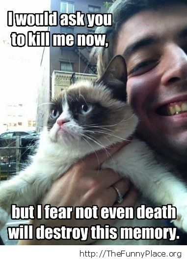 Grumpy Cat - Not even death