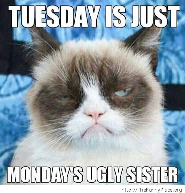 Grumpy Cat - Tuesday