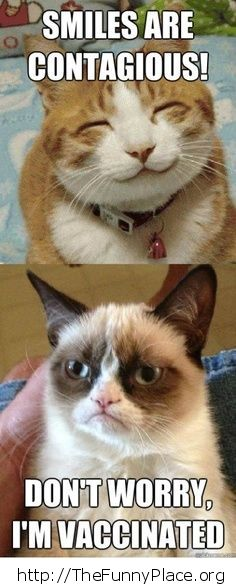 Grumpy Cat - Vaccinated
