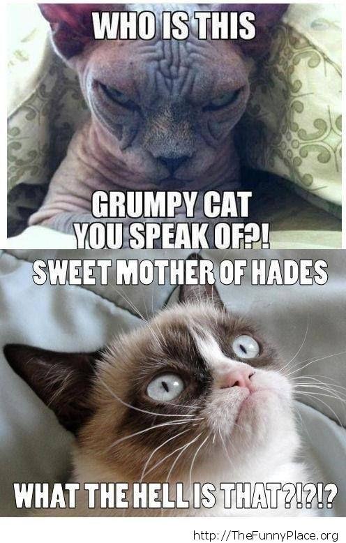 Grumpy cat - Even grumpier