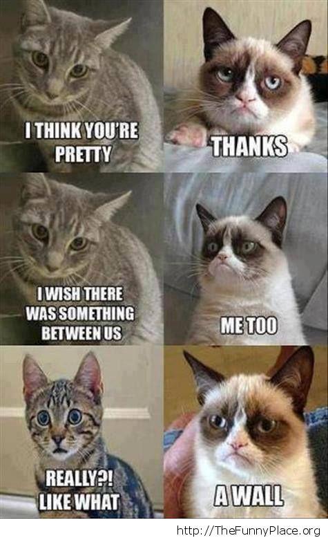 Grumpy cat - The wall